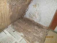 畳をめくり、床の状況のチェック
