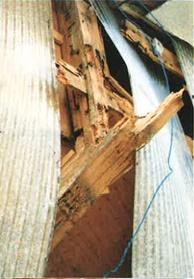 柱・土台がシロアリにより喰われ倒壊した例